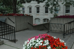 Kingston Petunias #1485