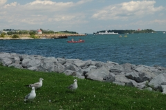 Kingston Shore Seagulls #1862