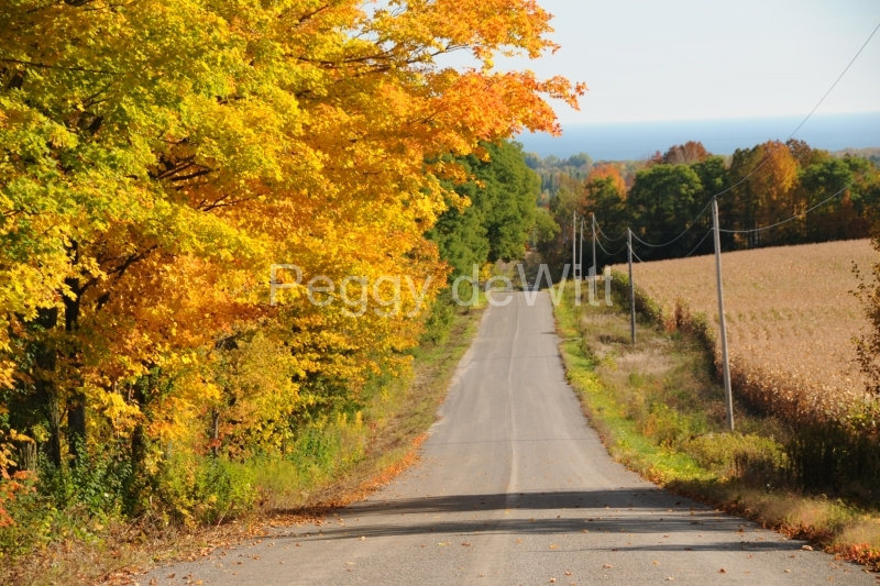 Colborne Road Fall #2360