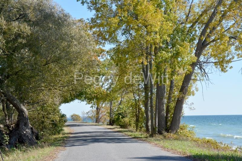Lane Road Cressy Fall #3282