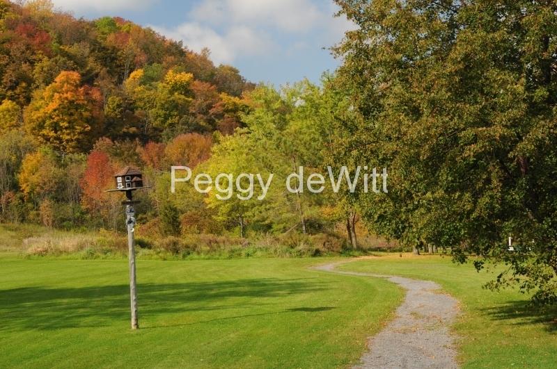 Picton Macaulay Mountain Path Fall 2 #2592
