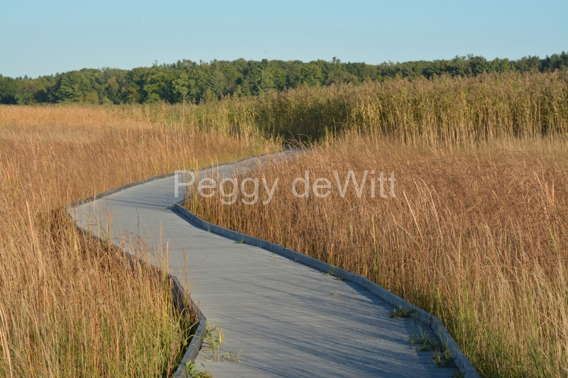 Presquile Marsh Boardwalk Fall #3316