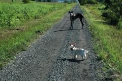 Lane Dogs #1544