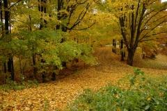 Lane Driveway Fall #1545