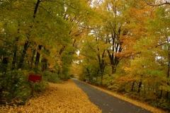 Lane Mailbox Fall #1546