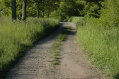 Lane Pt Petre Summer #1185