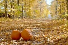 Lane Pumpkins Fall #281