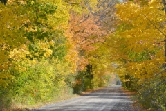 Lane Road Fall #3280