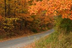 Lane Storms Fall #2175