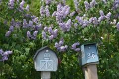 Mailbox Lilacs #3295