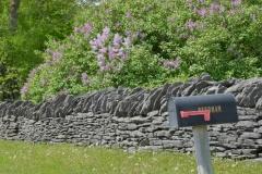 Mailbox-Lilacs-3754