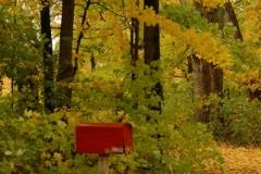 Mailbox Red Fall (v) #734