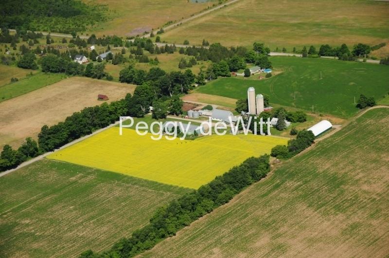 Milford Aerial Canola Field #2573