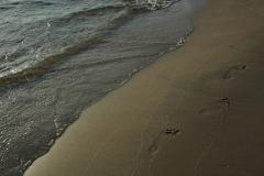 North Beach Footprints #638