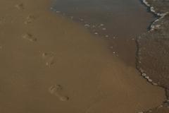 North Beach Footprints (v) #646