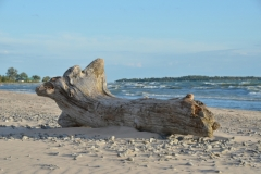 North Beach Park Log Huge #3302
