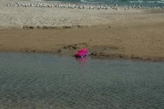 North Beach Pink Truck (v) #1879