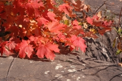 Parry Sound Fall Colours #1884