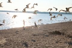 Sandbanks-Seagulls-Girl-3797