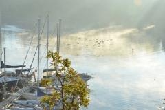 Picton Bay Misty Birds #3595