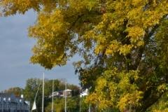 Picton Harbour Fall (v) #3305
