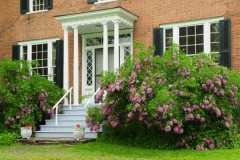 Picton Macaulay House Door Lilacs #2585