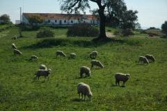 Portugal Santana da Serra 3 #876