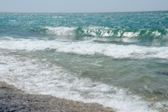 Pt Petre Shore Summer #3351