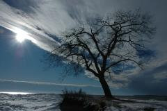 Pt Petre Tree Sun Winter #1576