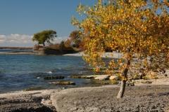 Pt Petre Trees Fall #2280