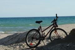 Sandbanks Bike #3327