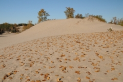 Sandbanks Dunes Leaves Fall #2294