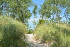 Sandbanks Dunes Path Grass #3333