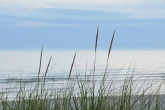 Sandbanks Grass Misty # 3117