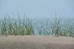 Sandbanks Grass Sparkling #3118
