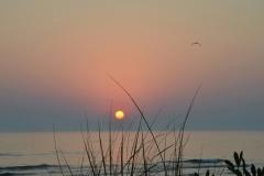 Sandbanks Grass Sunset #3338