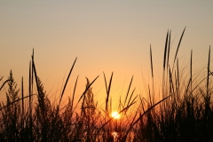 Sandbanks Grass Sunset #3611