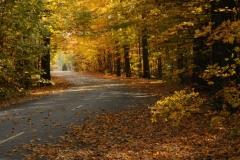 Sandbanks Lane Fall #2664