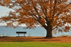 Sandbanks Outlet Bench Tree View Fall #3340