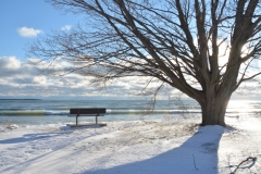 Sandbanks Outlet Bench Tree View Winter #3342