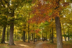 Sandbanks Park Fall 2 #2285