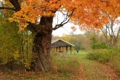 Sandbanks Park Fall 3 #2291