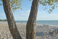 Sandbanks Richardson Tree Trunks #3369