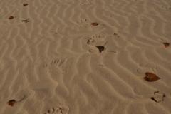 Sandbanks Sand Fall (v) #2296