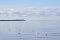 Sandbanks-Seagulls-Foreground-3796