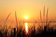 Sandbanks-Sunset-Grass-Tall-3801