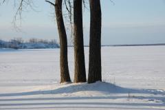 Sandbanks Three Trees Winter #1202