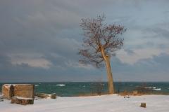 Sandbanks Tree Winter #1113