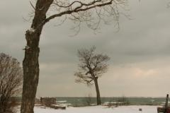 Sandbanks Trees West Point (v) #1921