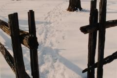 Sandbanks West Point Rail Fence Winter (v)